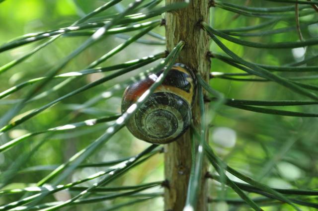 Śpiący ślimak
