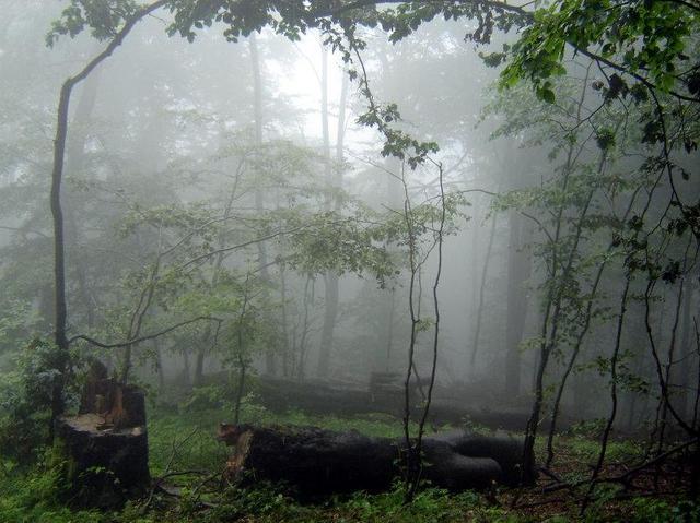Mgła 1
