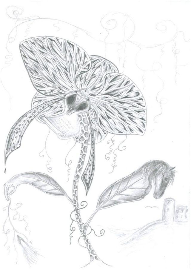 Karbanasa Magnora (MM)