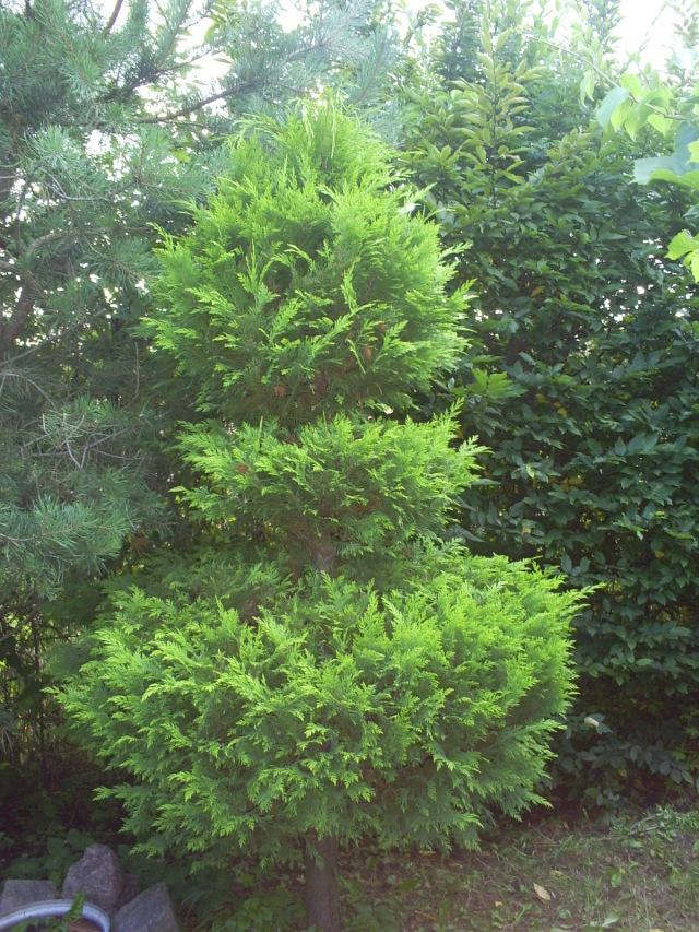 Elfie Drzewo