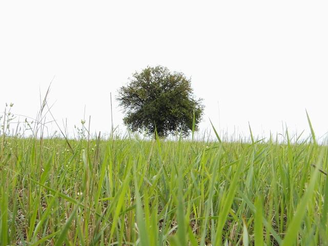 Soczysta zieleń