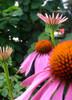 Kolorowe kwiatki, zielone liście...