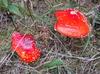 Czerwoni bracia