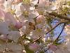 Wiosna czy to ty[FB]