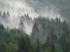 Drzewa osnute mgłą